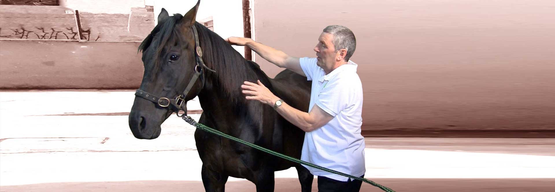 How animal energy healing helped  to heal an injured horse